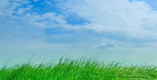Céu e prado Imagem de Stock Royalty Free