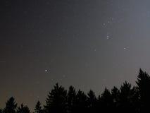 Céu estrelado acima das partes superiores da árvore de abeto fotografia de stock royalty free