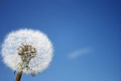 Céu, flor Foto de Stock Royalty Free