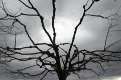 Céu invernal, tormentoso, cinzento com silhueta da árvore Fotos de Stock