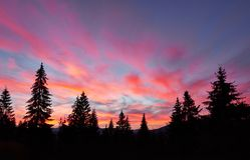Céu majestoso, nuvem cor-de-rosa contra as silhuetas dos pinheiros no tempo crepuscular Carpathians, Ucrânia, Europa Foto de Stock Royalty Free