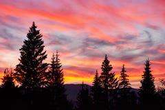 Céu majestoso, nuvem cor-de-rosa contra as silhuetas dos pinheiros no tempo crepuscular Carpathians, Ucrânia, Europa Fotografia de Stock Royalty Free