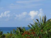 Céu, mar, nuvens e palmeiras Imagens de Stock
