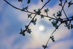Céu mensal da noite fotos de stock