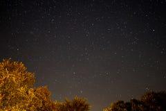 Céu na noite - ajardine na noite, no céu claro e nas muitas estrelas Fotos de Stock Royalty Free