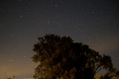 Céu na noite - ajardine na noite, no céu claro e nas muitas estrelas Fotografia de Stock