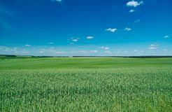Céu nebuloso azul da paisagem Belorussian imagem de stock royalty free