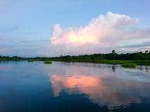 Céu nebuloso com beira-mar da árvore imagens de stock royalty free