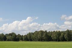 Céu nebuloso com grama e borda da floresta Fotografia de Stock Royalty Free