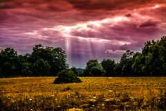 Céu nebuloso cor-de-rosa, campos dourados, árvores verdes Imagens de Stock