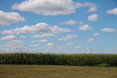 Céu nebuloso do verão acima dos moinhos de vento e do campo de milho Imagem de Stock