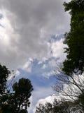 Céu nebuloso sobre as árvores verdes Foto de Stock Royalty Free