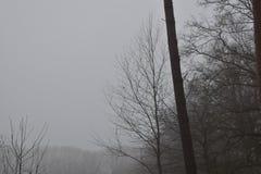 Céu nevoento do inverno fotos de stock royalty free