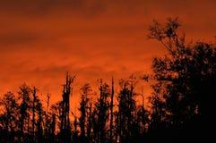 Céu no incêndio Foto de Stock
