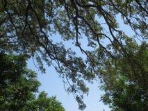 Céu no pátio traseiro Fotos de Stock Royalty Free