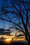 Céu no por do sol e na silhueta das árvores no fundo Imagens de Stock