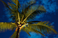 Céu nocturno tropical Imagens de Stock