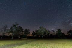 Céu noturno com estrela e árvore Foto de Stock