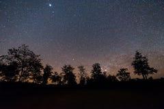 Céu noturno com estrela e árvore Imagens de Stock