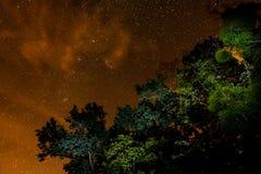 Céu noturno e árvores fotografia de stock