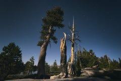 Céu noturno no parque nacional de Yosemite Foto de Stock Royalty Free