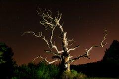 Céu noturno velho do carvalho fotografia de stock royalty free
