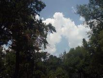 Céu, nuvens e árvores - Cielo, rboles do ¡ dos nubes y à foto de stock royalty free
