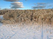 Céu profundo do taiga 8 fotografia de stock