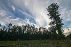 Céu rural da tarde da floresta perto do por do sol fotografia de stock