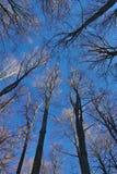 Céu sobre as árvores Imagem de Stock Royalty Free