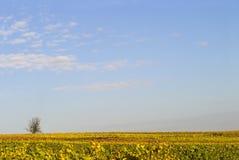 Céu sobre os wineyards Fotografia de Stock