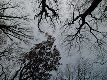 Céu sombrio com árvores Fotografia de Stock