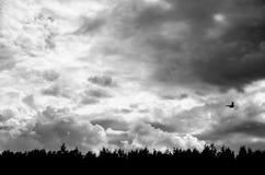 Céu sombrio com um pássaro só Fotos de Stock Royalty Free