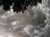Céu tormentoso e folhas Fotos de Stock