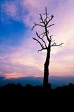 Céu tormentoso nebuloso, um dia novo, alvorecer da alta altitude, Fotografia de Stock