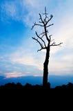Céu tormentoso nebuloso, um dia novo, alvorecer da alta altitude, Foto de Stock