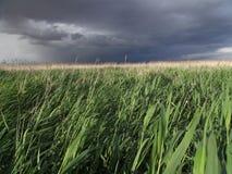 Céu tormentoso no campo fotos de stock royalty free