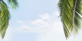 Céu verde da palmeira e azul tropical 3d Fotos de Stock Royalty Free