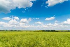 Céu verde do campo Foto de Stock