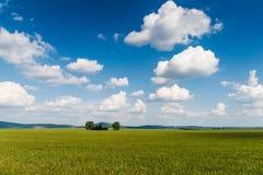 Céu verde do campo Fotos de Stock