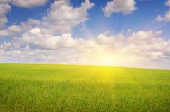 Céu verde do campo e do sol Fotos de Stock Royalty Free