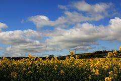 Céus azuis e nuvens do rolamento Fotos de Stock