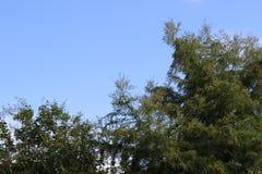 Céus azuis em Texas fotos de stock royalty free