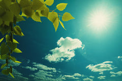 Céus azuis largos Imagem de Stock