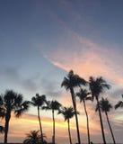 Céus cor-de-rosa e azuis com as palmeiras no crepúsculo Foto de Stock Royalty Free