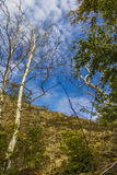 Céus e árvores Imagem de Stock