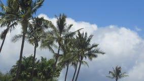 Céus havaianos Fotografia de Stock Royalty Free