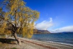 Cênico bonito do wanaka do lago no impo de Nova Zelândia da ilha sul imagem de stock royalty free