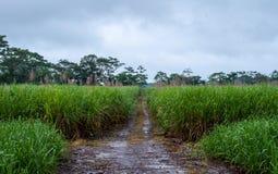 Cênico rural Fotografia de Stock