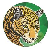 Círculo da cabeça de Jaguar Fotos de Stock